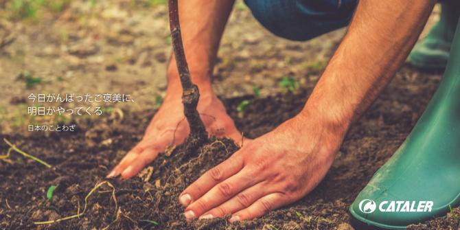平成30年度 磐田市海岸防災林植樹祭
